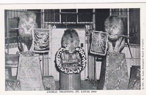 Missouri St Louis Zoo Animal Training Lions