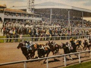 Vintage Postcard Tropical Park Gables Horse Racing Association Miami Florida 472