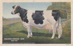 HOLSTEIN-FRIESIAN COW, 1930-40s