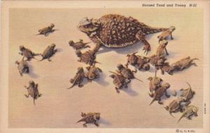 Frogs Horned Toad and Young Curteich