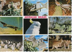 Australian Wildlife Australia Multiview Penguins Cockatoo Emus Postcard D24