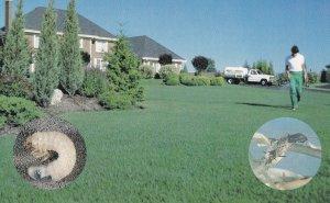ONTARIO, Canada, 1950-1960s; Mac Lawn Spray, White Grub Larva, Chinchbug