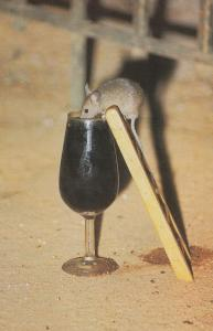 Mouse Drinking Wine Spanish Unique Mice Advertising Postcard