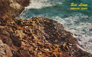 Oregon Coast Sea Lions Sunning On Shoreline At Sea Lion Caves