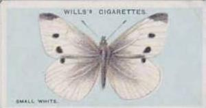 Wills Vintage Cigarette Card British Butterflies No. 47 Small White 1927