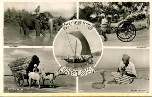 Greetings from Ceylon - 5 Views   *RPPC