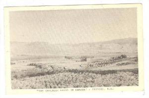 The Earliest Fruit In Canada, Osoyoos, B.C., Canada, 1910-1920s