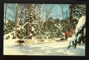 Lake Placid, New York/NY Postcard, Dog Sled Race