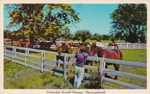 Kentucky Lexington Blue Grass Horse Farm