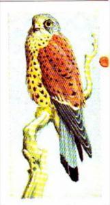 Brooke Bond Tea Trade Card Wild Birds In Britain No 32 Kestrel