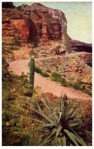 Arizona On the road to Roosevelt , Carriage thru the plains