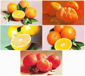 5 Advertising Postcards for Florida Department of Citrus Orange Grapefruit 1970s