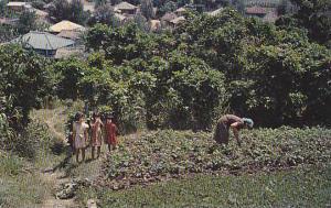 Garden Patch , Okinawa , Japan, 40-60s