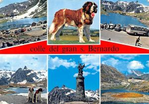 Italy Colle del Gran S. Bernardo Statue Mountain Cars Voitures Dogs