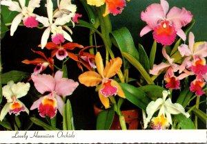 Hawaii Lovely Hawaiian Orchids