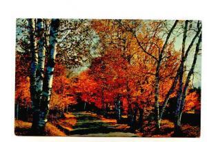 Autumn Trees,  Greetings from Morehead City, North Carolina