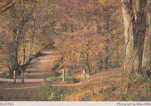 North Weald Forest Trees Park Rare Photo Postcard