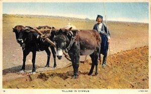 br105069 tilling in cyprus horse ethnic folklore