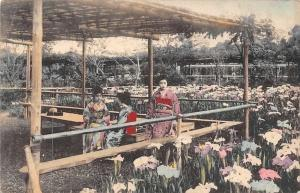 Japan Japanese Traditional Geishas in Flowers Garden, Postcard Postkarte