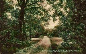 New Forest Bolderwood Road Forest Promenade Postcard