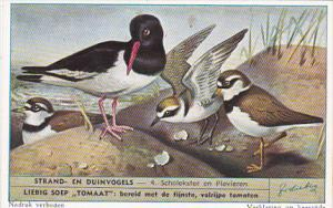 Liebig S1610 Birds Of Beaches and Dunes No 4 Scholekster