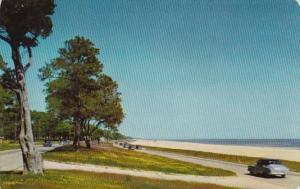 Mississippi Gulf Coast Scene Along U S Highway 90 1954