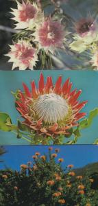 South Africa African 3x Flower Postcard s