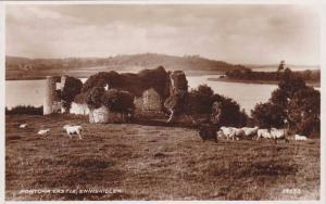 RP, Flock Of Sheep, Portora Castle, Enniskillen, Northern Ireland, UK, 20-40s