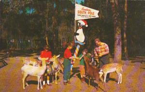 Children Feeding Deer At Tommy Bartlett's Deer Ranch Silver Springs Florida