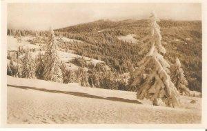 U70952 romania harghita tinutul harghitei mountains winter snow fir forest