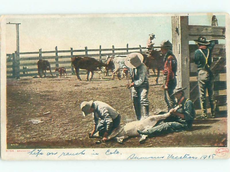 c1910 Western BRANDING COWS IN THE OLD WEST AC4311