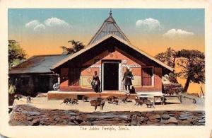India The Jakku Temple Simla Monkeys Animaux