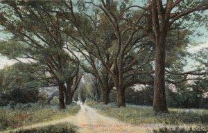 SAVANNAH , Georgia, 1910 ; Avenue of Oaks at Hermitage