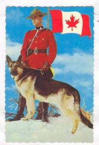 Royal Canadian Mounted Policeman with German Shepard, Canadian flag, 40-60s