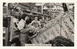RP: SALINAS , California , 1930s - 40s ; Lettuce Packing Shed Interior
