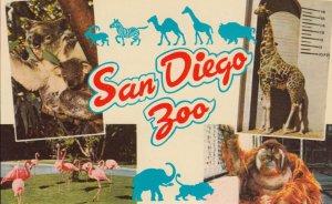 SAN DIEGO , California , 1950-60s ; Zoo ; Giraffe