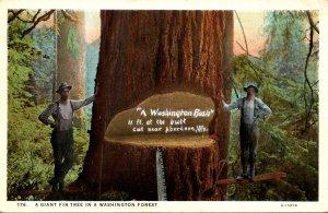 Washington Giant Fir Tree Nnear Aberdeen Curteich