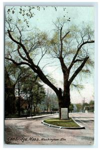 Postcard Washington Elm, Cambridge, Mass MA C11