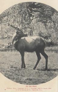 Deer/Elk on Alert , B.C. , Canada , 1910