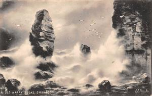 Old Harry Rocks, Swanage Birds Sea Storm Rocks 1908