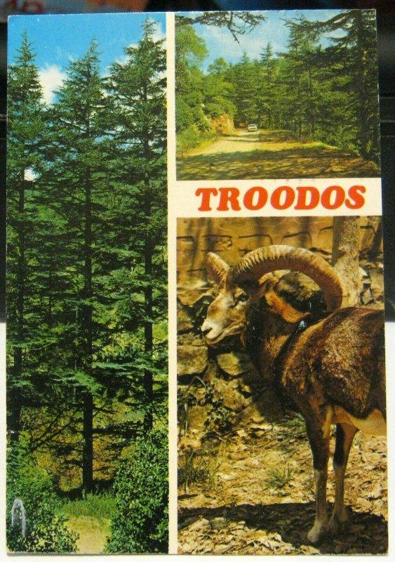 Cyprus Troodos Cedar Trees Mouflon Cedar Valley - posted 1982