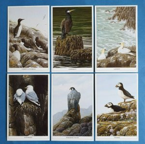 Set of 6 British Wild Birds Postcards by Geoff White Ltd, Puffins Gannets Falcon