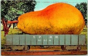 Vintage California EXAGGERATION Postcard Carload - A Mammoth Pear Mitchell