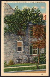 Virginia WINCHESTER Nature's Freak Tree growing out of House - LINEN