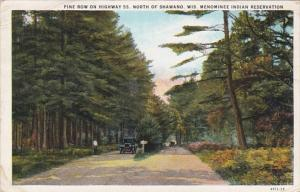 Wisconsin Pine Row On Highway 55 North Of Shawano Monominee Indian Reservatio...