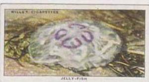 Wills Vintage Cigarette Card The Sea-Shore No 42 Jelly Fish  1938