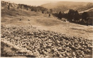 RP: Flock of Australian Merino Sheep , 00-10s
