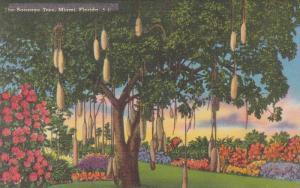 The Sausage Tree, Miami, Florida, PU-1955