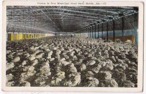 Cotton, Mobile Ala