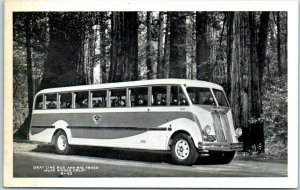 Vintage Muir Woods, California Postcard GRAY LINE BUS & BIG TREES Bardell
